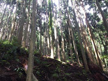山林売買の事例