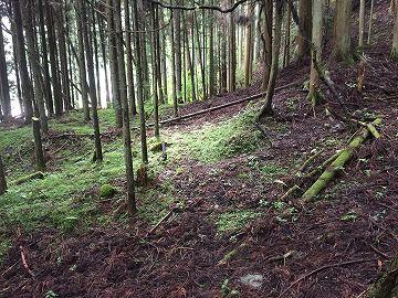 山林 古い林道