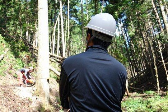 山林を所有する価値と意義