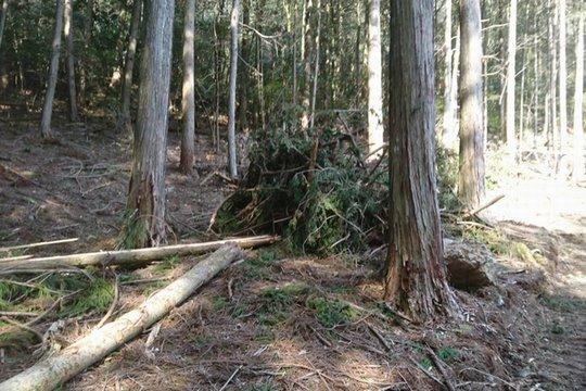 山林放棄や所有者不在の問題