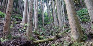 山林物件 京都市西京区南松尾