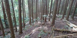 山林物件 京都市伏見区醍醐陀羅谷
