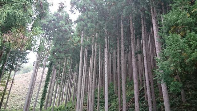 山林物件 滋賀県大津市葛川木戸口町