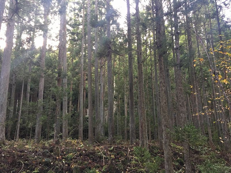 山林物件 京都市北区西賀茂笠松