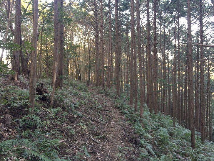 山林物件 和歌山県東牟婁郡古座川町