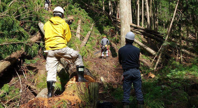 林業の補助金・支援制度