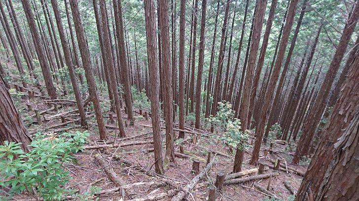 山林物件 奈良県吉野郡天川村
