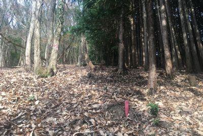 山林 境界線