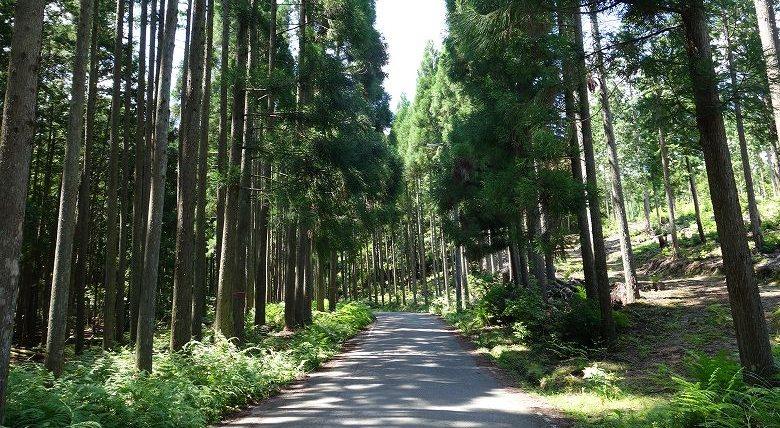 山林の固定資産税