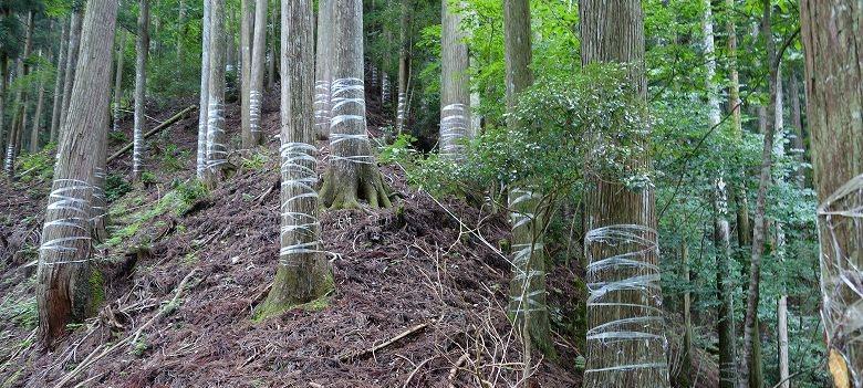 山林売却の方法と手順