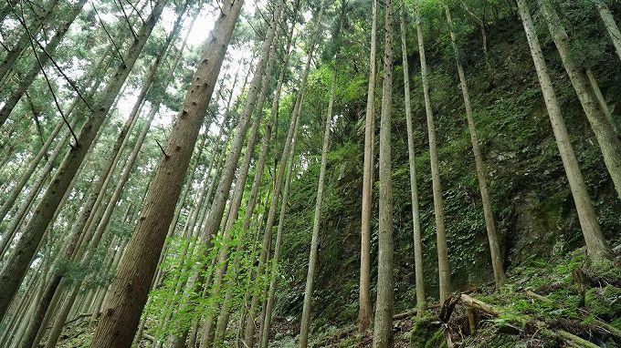 山林物件 和歌山県伊都郡かつらぎ町