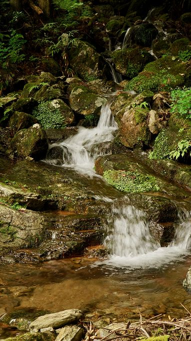 登山道に沿う小川