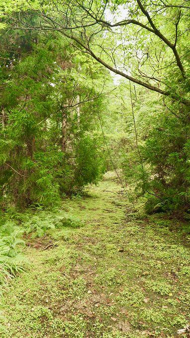 林内の作業道