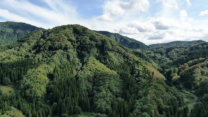 山林物件 秋田県横手市 南側対象地