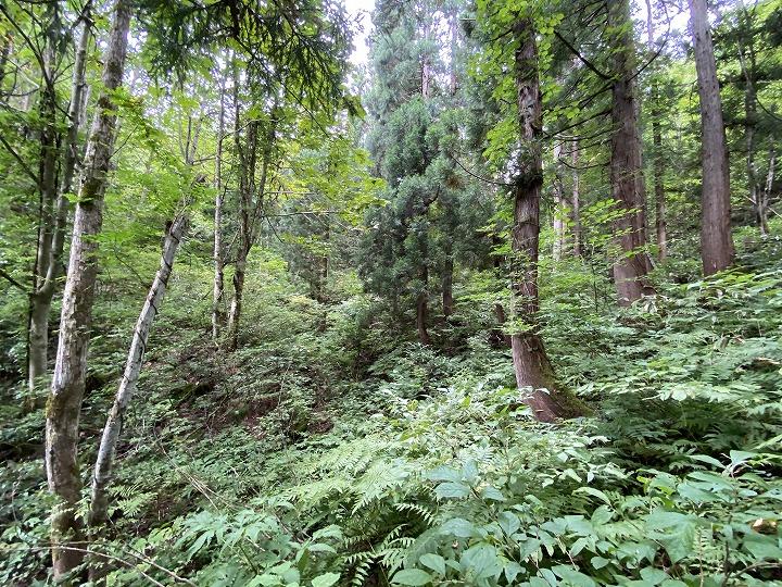 山林物件 秋田県横手市 南側林内の様子