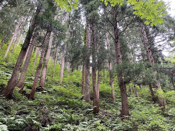山林物件 秋田県横手市 西側林内の様子