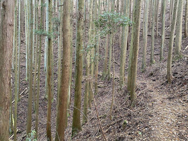 山林物件に至る里道