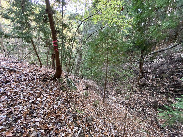 山林境界付近