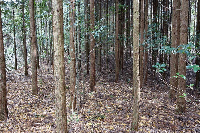 山林物件 京都市北区上賀茂