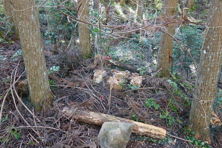 山林 しいたけ菌床