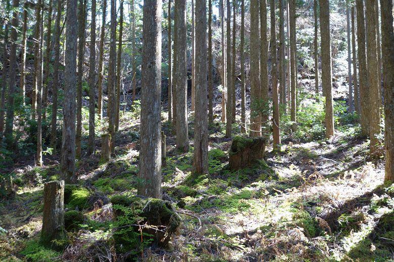 個人の山林所有