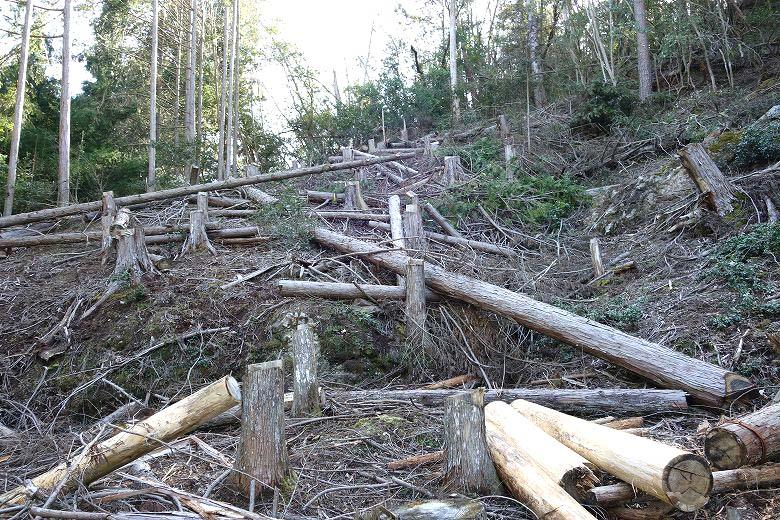 山林 自分で伐採
