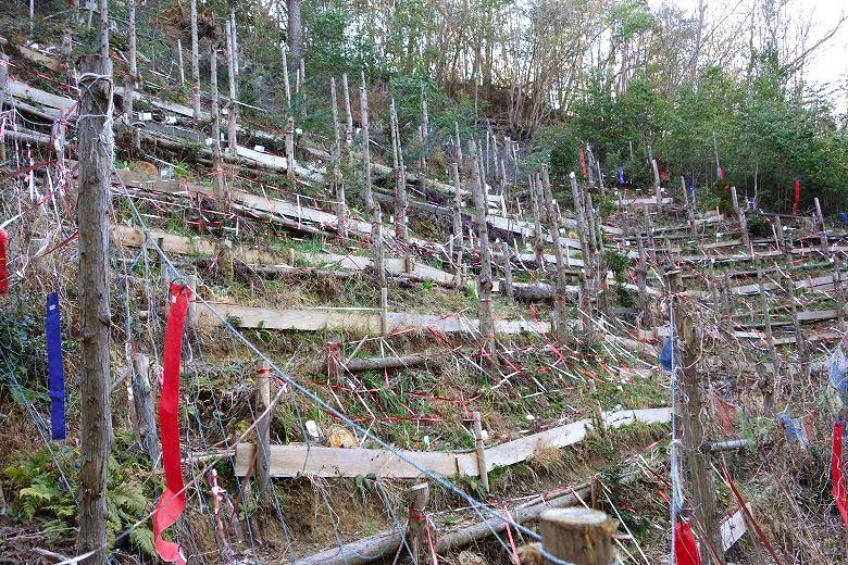 山林活用事例 自然農園