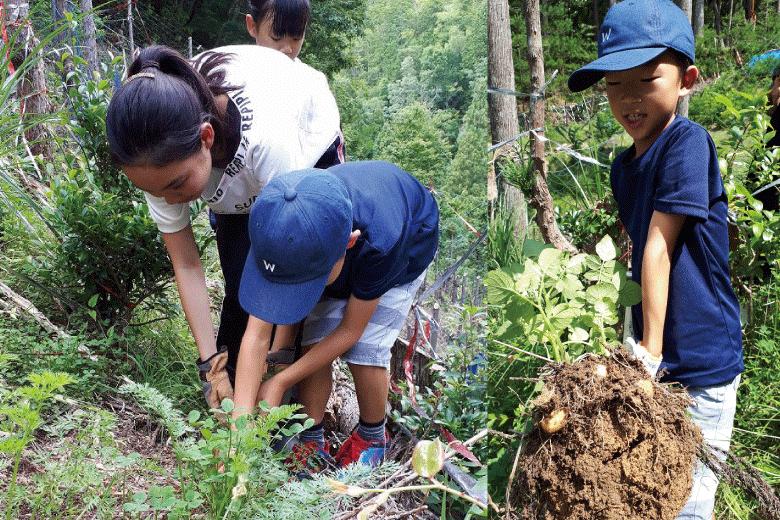 自然農園 野菜を収穫