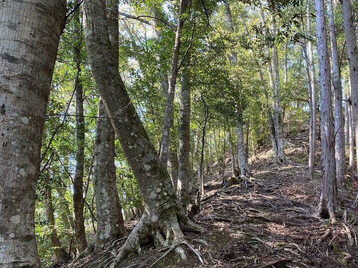 奈良県十津川村山林物件 雑木