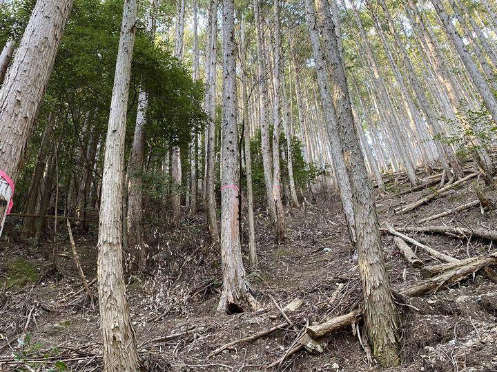 奈良県十津川村山林物件 境界付近