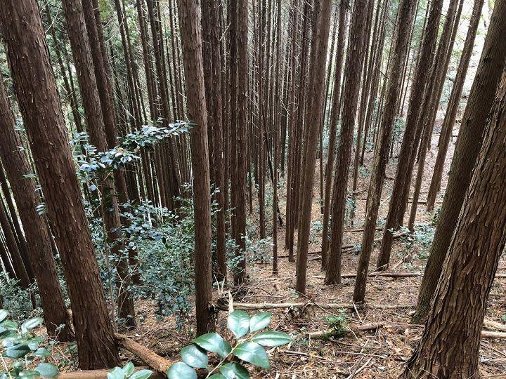 山林物件 ヒノキ