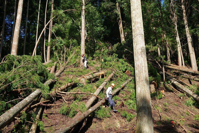 自伐型林業の楽しみ