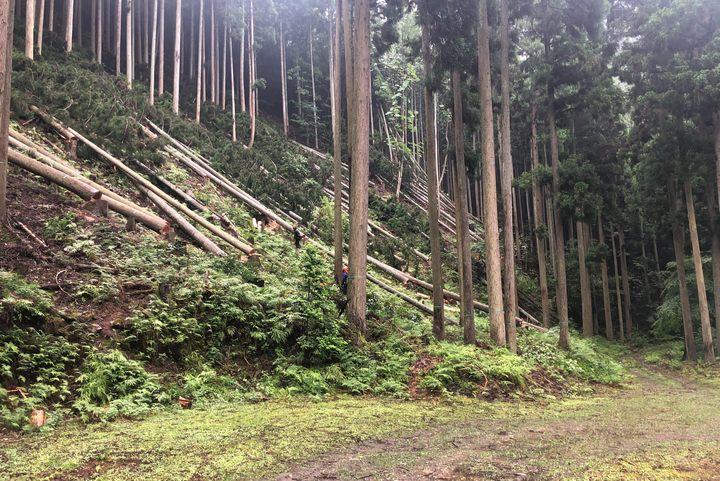 自伐林業のすすめ