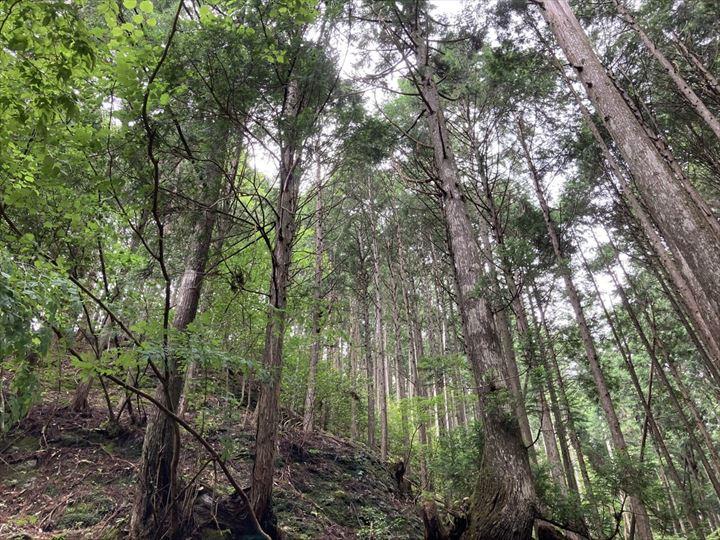 山林物件 京都市右京区京北