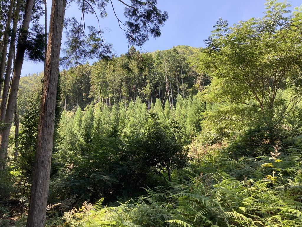 山林物件 兵庫県三田市小柿
