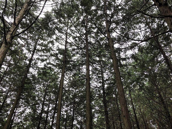 山林物件 栃木県芳賀郡茂木町