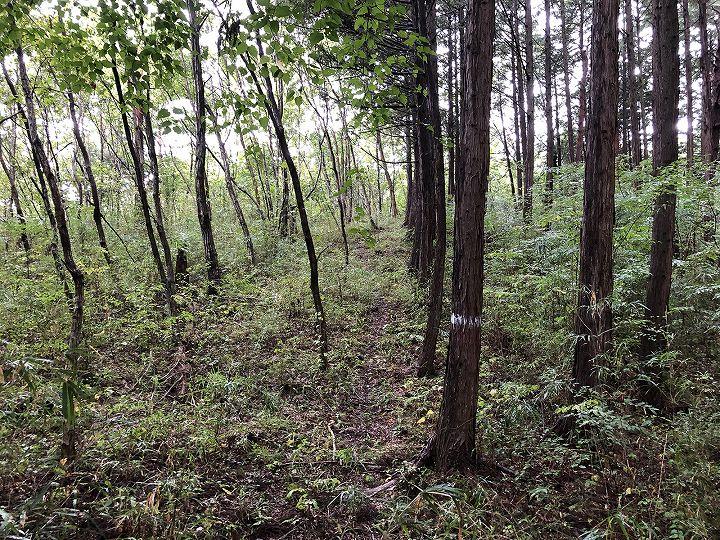 栃木県芳賀郡山林物件 境界