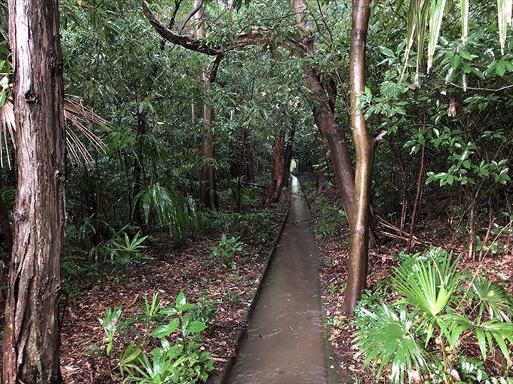 茨城県猿島郡山林物件 側境界付近の水路