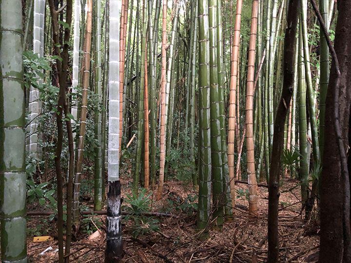 茨城県猿島郡山林物件 山林内の竹
