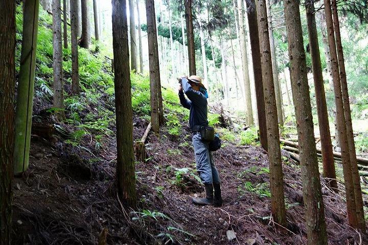 山林購入の方法と手続き