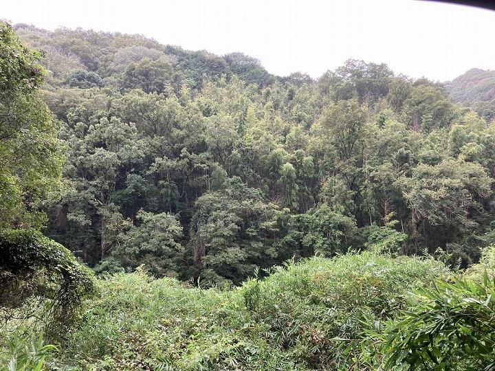 山林物件 和歌山県紀の川市