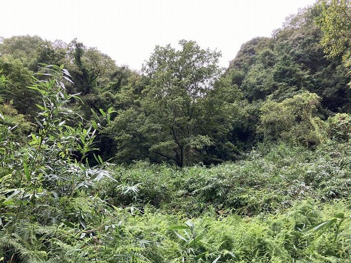 山林物件境界付近 和歌山県紀の川市