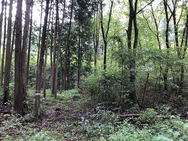 栃木県山林物件 境界付近