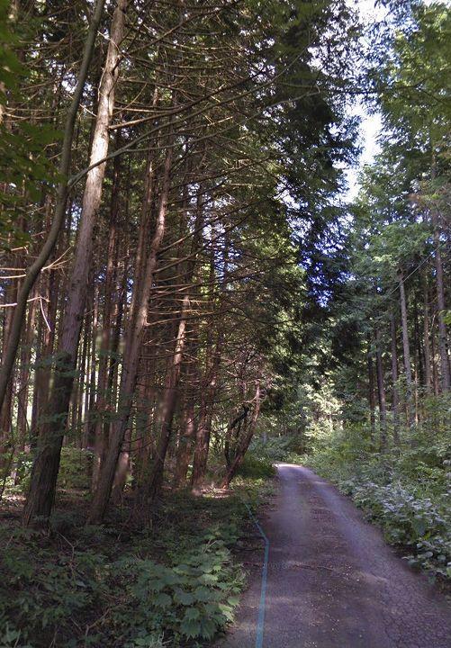栃木県山林物件 前面道路