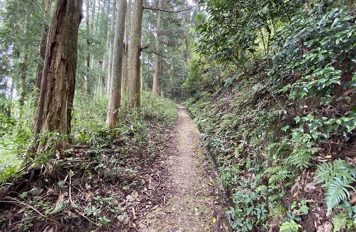 山林物件情報 接道条件