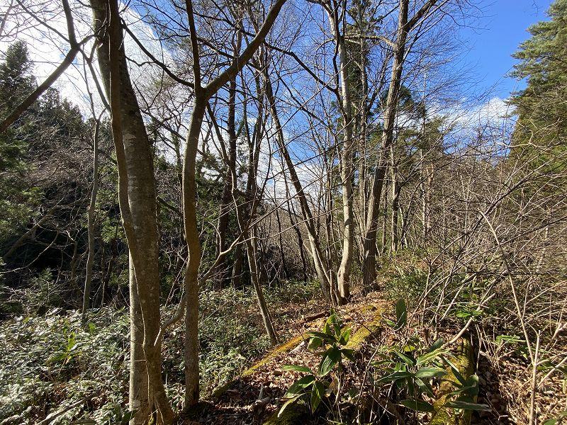 青森山林物件 薪向けの雑木