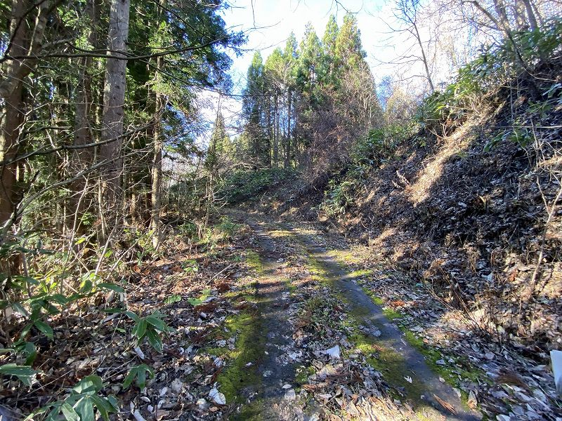青森県山林物件 林道