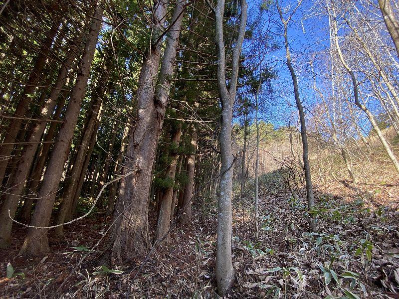 山林物件 青森県 鉄塔付近