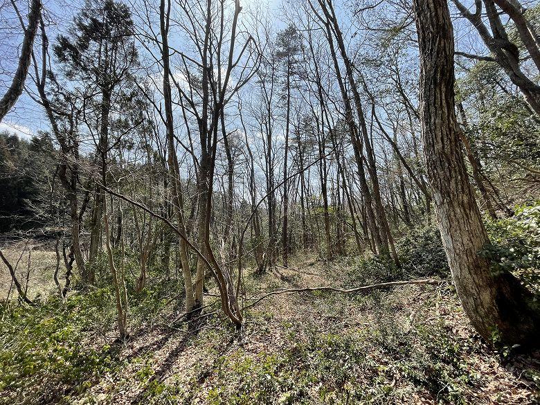山林物件 広島県山県郡 林内に残る雑木