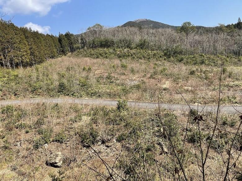 山林物件 広島県山県郡 現地西側